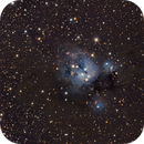 NGC7129,                                Mark Holbrook