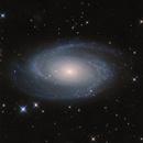 M81 / NGC 3031 / Bode's Galaxy,                                Falk Schiel