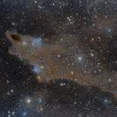 The Dark Shark, LDN 1235,                                Poochpa