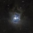 The Iris Nebula, NGC 7023,                                Steven Bellavia
