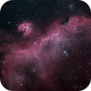 IC2177 - The Seagull Nebula,                                Ian Dixon