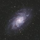 Messier 33 Triangulum Galaxy,                                Andy Rattler Brown