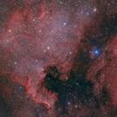 Cygnus Group,                                John Bozeman