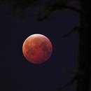 Lunar eclipse 21 Jan 2019,                                Harri Heikkinen
