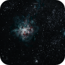 Tarantula Nebula,                                Damien Finlayson