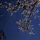 Mond und Orion in einer kalten Spätherbstnacht,                                Gottfried Meissner