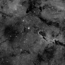 IC 1396 and The Elephant Nebula,                                dennis1951