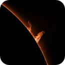 Raging Prominence  on the Sun Today,                    Chuck's Astrophot...