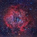 NGC 2237 Rosette Nebula,                                Rad