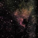 NGC 7000 - North America Nebula,                                Tom Gray