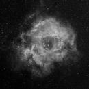 Rosette Nebula in Ha,                                Jan Bielański