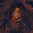 NGC 2264 - Christmas Tree Nebula,                                Roman Pearah