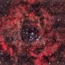 NGC 2244 - Rosette Nebula,                                Gerson Pinto