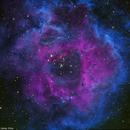 Rosette Nebula,                                  Xin Xie