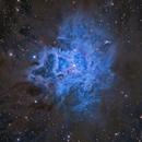 NGC 7023 The Iris Nebula,                                tonyhallas