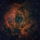 NGC 2237 Rosettennebel,                                Hardy