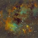 IC410 - Tadpoles - SHO,                    Kenneth Hoynes