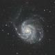 M101 - Pinwheel Galaxy,                                Bill Long