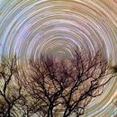 Star Trails around the Polaris,                                Giuseppe Donatiello