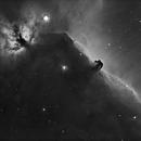 Horse Head,                                Martin Williams