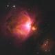 Rose M42,                                lobtail
