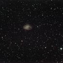 M1 - nebulosa granchio,                                boxfox