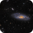 M106 - The Splendid Galaxy (HaLRGB),                    Frank Breslawski