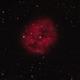 Cocoon Nebula,                                John Corban