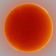Sun - Ha - 11:30UT - 4 April 2020,                                Roberto Botero