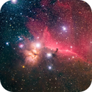 Pferdekopfnebel und Flammennebel, IC434 u NGC 2024,                                Gerhard Aschenbrenner
