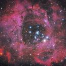 Rosette Nebula NGC2244,                                Kevin Parker