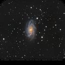 NGC2336,                                Michael Feigenbaum