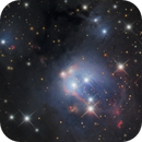 NGC 7129,                                Lyn Peterson