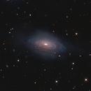 NGC3521 - Bubble Galaxy,                                Rich Sornborger
