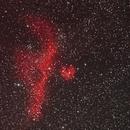IC 2177 Seagull Nebula,                                RonAdams