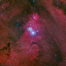 Merry Christmas Nebula from Deep Sky West,                                Miles Zhou