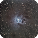 NGC 7023, The Iris Nebula,                                Chris Duffey