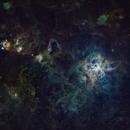 Tarantula Nebula,                                Jess Carlisle