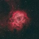 NGC 2237 - Rosette Nebula,                                Michael Grondijs