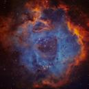 NGC 2237 - THE ROSETTE NEBULA,                                Shaun Robertson