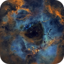 C-49 (The Rosette Nebula),                                Randal Healey