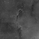 Elephant trunk nebula,                                Justin Daniel