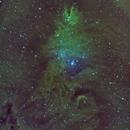NGC2264 - Christmas Tree Nebula,                                Sven Hoffmann