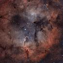 Elephant's Trunk Nebula (IC 1396),                                Richard Vanderbeek