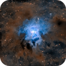 NGC7023 - The Iris Nebula,                                Jason Guenzel