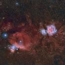 Orion- and Horsehead Nebula,                                Frank