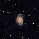 NGC 4535,                                Paul R. Hitchcock