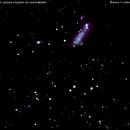 ngc2363  ngc2366 galassia irregolare nel camelopardo                      distanza 11 miloni 400 mila A.L.,                                Carlo Colombo