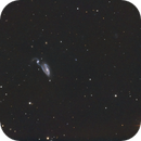 """NGC 5395 in Canes Venatici """"The Heron Galaxy."""",                                Pat Rodgers"""