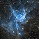 NGC 2359 - Thor's Helmet (SHO),                                Dhaval Brahmbhatt